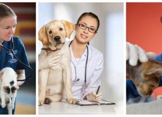 El campo laboral de la carrera de veterinaria. Su sueldo promedio anual, y sus funciones